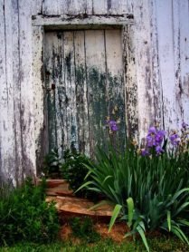 Old Smokehouse Door