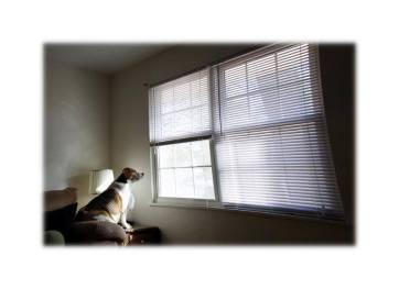 Daisy in the Window